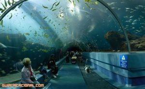 Visita al acuario de Nueva York