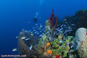 Turismo de aventura en el Caribe