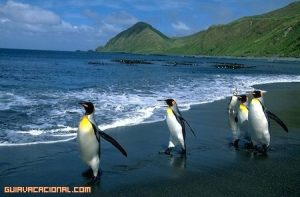 Espectacular Isla Macquarie en el Océano Glacial Antártico